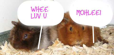 Whee Luv Mohlee, guinea pigs